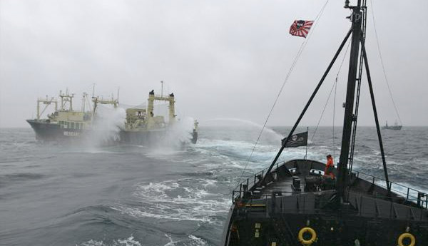 water cannons, whalers, sea shepherd