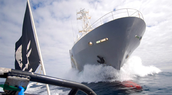 whale wars, sea shepherd