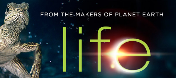 Discovery Channel To Simulcast 'LIFE' On Seven Networks ...