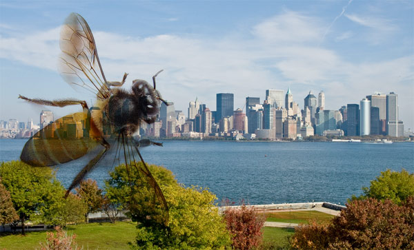 new york city, bees