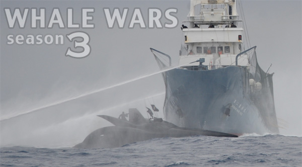 whale wars season three