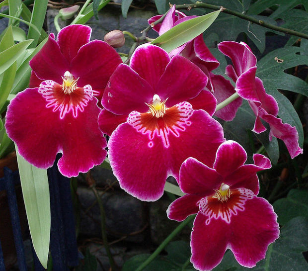 Orchids are an amazing plant of the rainforest