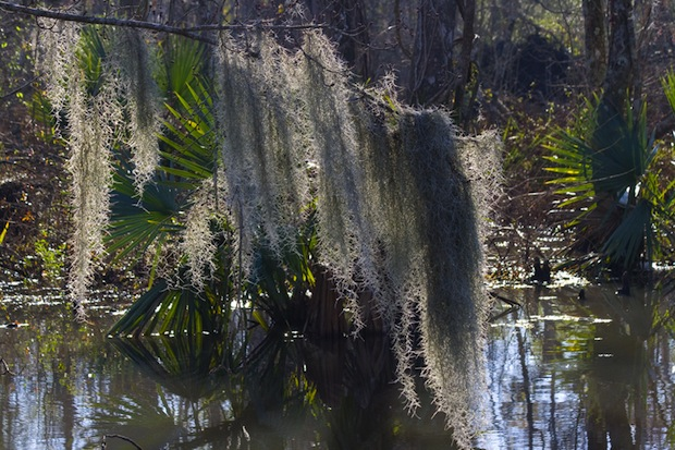 Manchac swamp is supposedly haunted by a voodoo priestess and home to the Rougarou, the Cajun werewolf.