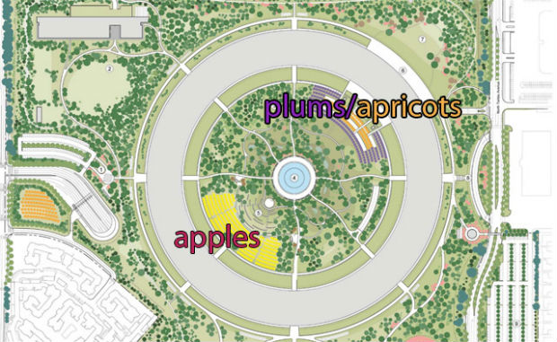 Apple's 'Spaceship' headquarters goes green with fruit farm