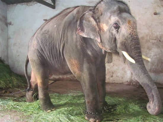 Paul McCartney is pleading for the release of abused Indian elephant Sunder.
