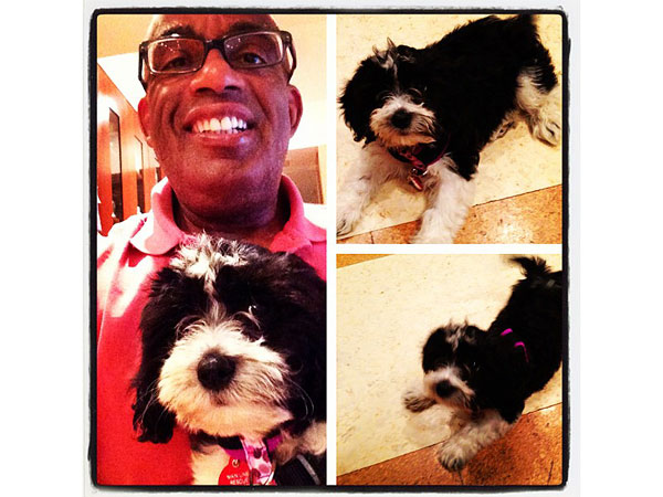 al roker and rescue dog