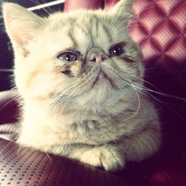 bieber kitten