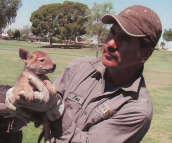 Golf course workers in Arizona rescued a coyote pup covered in cactus spines.