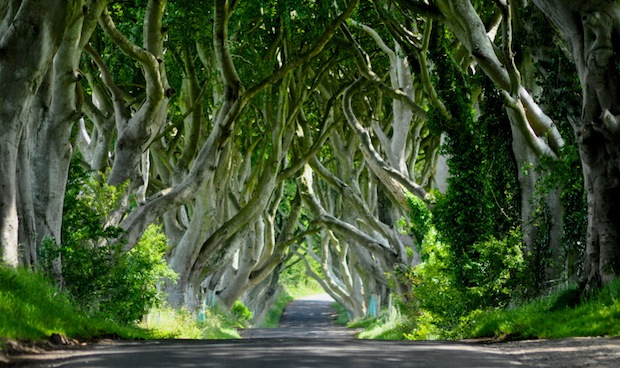 The Dark Hedges is an avenue of beech trees planted by the Stuart family in Northern Ireland in the eighteenth century.