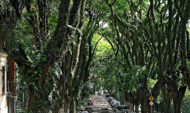 The rua goncalo de carvalho in Brazil has been described as the most beautiful street in the world.
