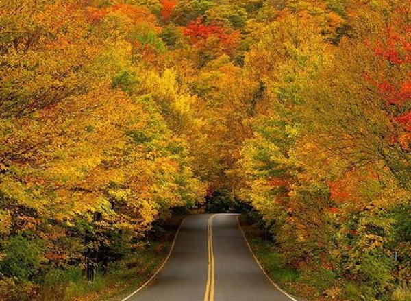 Autumn trees form a spectacular tunnel on the drive to Smugglers' Notch State Park in Vermont.