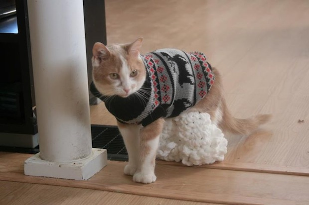 Willow was born with backward hind legs, so her owner created special leggings to help with her mobility.