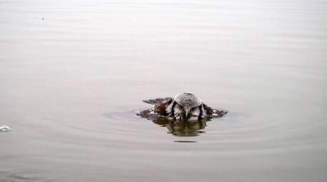 kayaker saves owl from freezing